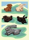 Cinco conejos del vector Fotografía de archivo