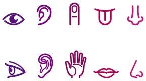 Cinco ícones dos sentidos Fotos de Stock