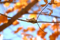 Cinco dólares Bill Clinging como uma folha de uma árvore imagens de stock