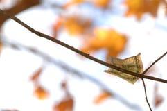 Cinco dólares Bill Clinging Solo como uma folha de uma árvore foto de stock royalty free