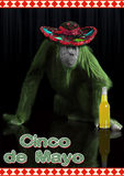 Cinco De Mayo Lizenzfreie Stockfotos