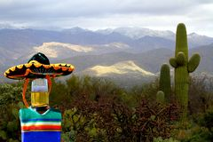 Cinco de Mayo beer bottle posing with cactus in the desert. This Cinco de Mayo beer bottle is posing with cactus in the desert. It is dressed up for a fiesta