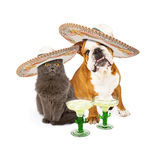 Cinco De Mayo Cat et chien Images stock