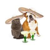 Cinco De Mayo Cat und Hund Stockbilder