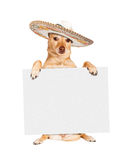 Cinco De Mayo Dog Carrying Blank-Zeichen Stockbilder