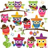 Cinco de Mayo O temacie kolekcja sowy Zdjęcie Royalty Free