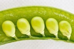 Cinco ervilhas em um vagem Imagem de Stock Royalty Free