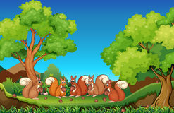 Cinco esquilos que comem nozes no parque Imagens de Stock Royalty Free