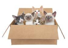 Cinco gatinhos em uma caixa marrom Foto de Stock Royalty Free