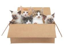 Cinco gatitos que miran fuera de una caja marrón Imagen de archivo libre de regalías