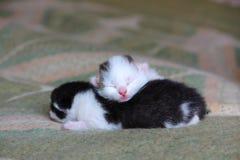 Cinco gatitos viejos del bebé de los días Foto de archivo libre de regalías