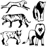 Cinco gatos selvagens Fotos de Stock