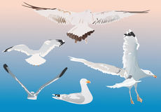 Cinco gaviotas en fondo azul Fotografía de archivo