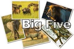 Cinco grandes africanos fotos de archivo libres de regalías