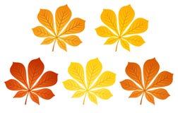 Cinco hojas de la castaña del otoño. Ilustración del vector. libre illustration