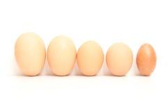 Cinco huevos Fotos de archivo