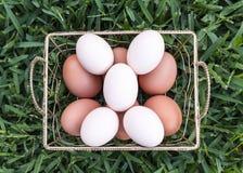 Cinco huevos blancos Fotografía de archivo libre de regalías