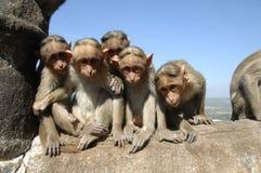 Cinco macacos na parede Imagens de Stock Royalty Free