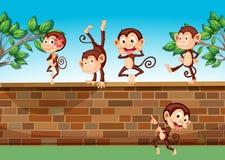 Cinco macacos que jogam na cerca Fotos de Stock Royalty Free