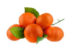 Cinco mandarinas en una rama con las hojas verdes en un primer aislado fondo blanco foto de archivo libre de regalías
