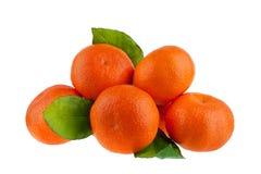 Cinco mandarines en una rama con las hojas verdes en un primer aislado fondo blanco fotos de archivo libres de regalías