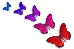 Cinco mariposas del color imágenes de archivo libres de regalías