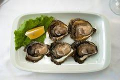 Cinco ostras em uma placa Imagem de Stock Royalty Free