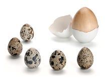 Cinco ovos de codorniz e um ovo de madeira em um shell Imagem de Stock Royalty Free