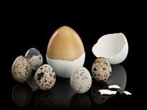 Cinco ovos de codorniz e um ovo de madeira em um shell Foto de Stock