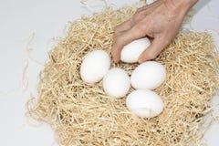 Cinco ovos no ninho Fotos de Stock