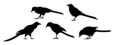 Cinco pájaros Fotografía de archivo libre de regalías