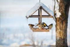 Cinco pájaros en el alimentador fotos de archivo