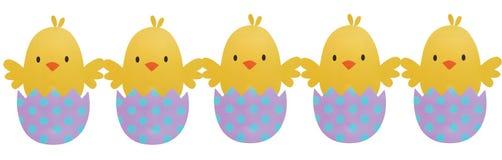 Cinco Páscoa Chick Hatching no fundo isolado Foto de Stock