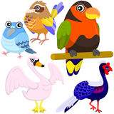 Cinco pássaros bonitos coloridos Imagens de Stock