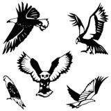 Cinco pássaros de rapina Imagens de Stock