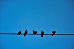Cinco pássaros em um fio Fotografia de Stock Royalty Free