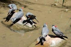 Cinco pássaros no verão Imagens de Stock Royalty Free
