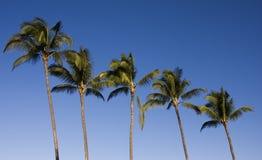 Cinco palmeiras fotografia de stock royalty free