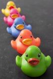 Cinco patos en un fondo de la obscuridad de la fila Imágenes de archivo libres de regalías
