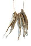 Cinco peixes secados da barata do mar na corda Imagem de Stock