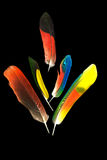 Cinco penas de pássaro coloridas do papagaio no preto Foto de Stock Royalty Free