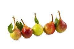 Cinco peras frescas Imagem de Stock