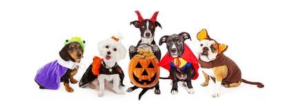 Cinco perros que llevan la bandera de los disfraces de Halloween Foto de archivo libre de regalías