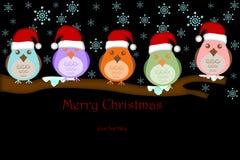 Cinco pájaros con el sombrero de Santa en ramificaciones de árbol Foto de archivo