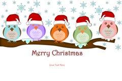 Cinco pájaros con el sombrero de Santa en ramificaciones de árbol Foto de archivo libre de regalías