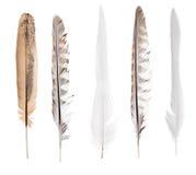 Cinco plumas aisladas rectas largas Fotos de archivo