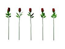 Cinco rosas Imagens de Stock Royalty Free
