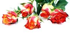 Cinco rosas Foto de archivo
