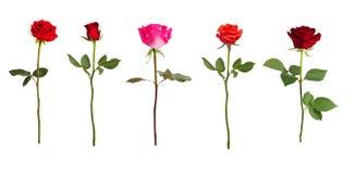 Cinco rosas de diversos colores Foto de archivo libre de regalías