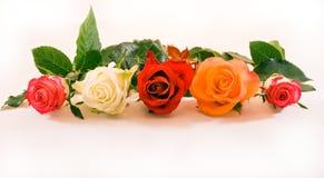Cinco rosas en una fila imagen de archivo libre de regalías